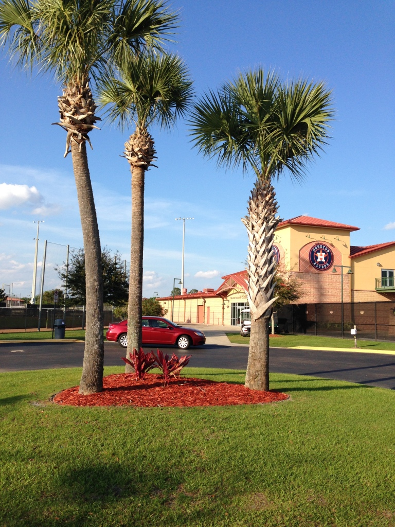 You know you're in Florida when there's palm trees in front of the offices.